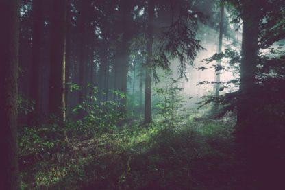 skog, skymning, pinnbröd och linolja, kvällsljus, skogsbad