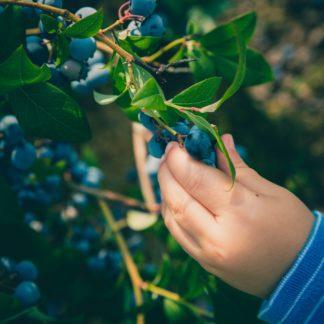 barn, familj, äventyr, upptäcka, blåbär, lycka, må bra, naturen, skogen, livet, de små,